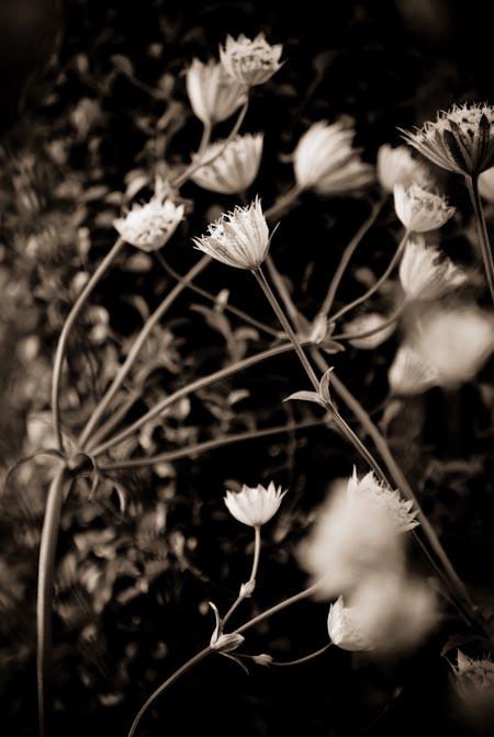Hampton Court Flower Show. Terrie Wixon Gibbs
